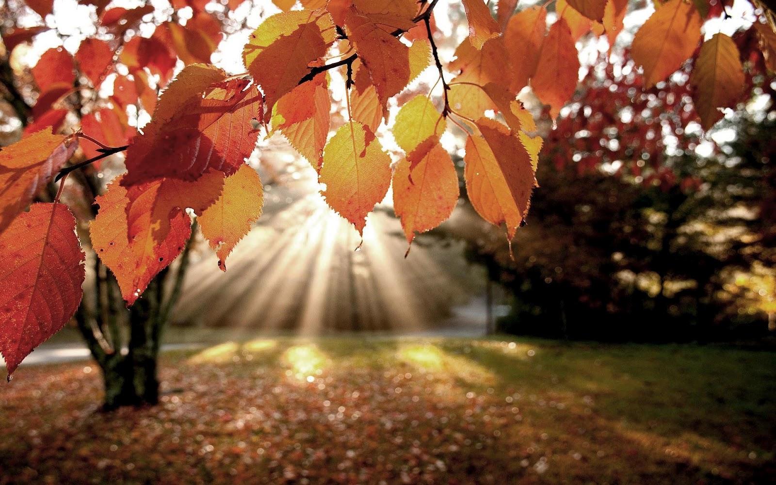 herfst-zonnestralen